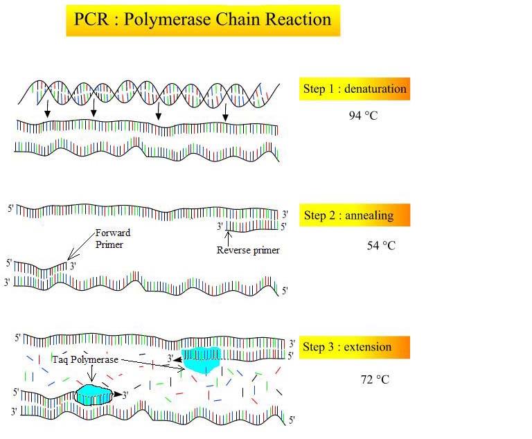 Badanie DNA - nowoczesna metoda PCR