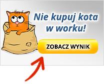kot_w_worku